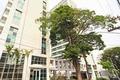 Sala Comercial para alugar e comprar, Santo Amaro - São Paulo Foto 5