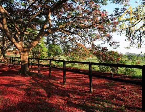 Terreno para alugar e comprar, Fazenda Boa Vista - Fase I Porto Feliz - SP Foto 24